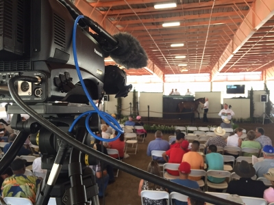 Live Webcasting Services for Race Horse Auction